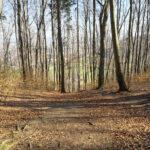 Radfahren im Wald